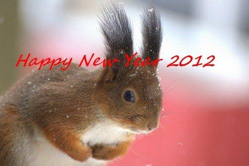 Vœux pour la Nouvelle Année 2012 à tous dans Pape Benoit Squirrel-In-The-Snow-Mustamae-Estonia-SunCat3