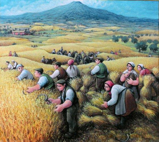 imm fr récolte dans le plaine de Catania